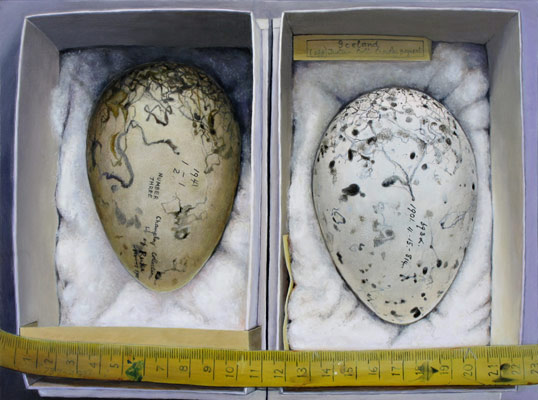 Isabella Kirkland, Great Auk Eggs, 2011 ikf1104